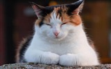 Title:cats 01-Cat photography wallpaper Views:5797