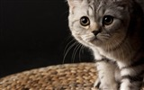Title:curious cat-Cat photography wallpaper Views:6049