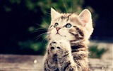 Title:Lovely cat photography wallpaper Views:35251