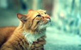 Title:cute orange cat-Animal photography wallpaper Views:7528