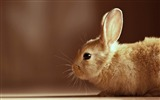 Title:cute rabbit -Animal photography wallpaper Views:7215