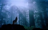 Title:howling in the night-Animal photography wallpaper Views:6181