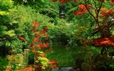 Title:kyoto garden Beautiful-Japan Landscape Wallpaper Views:14026