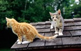 Title:observing cats-Cat photography wallpaper Views:5536