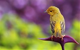 Title:Cute animal wallpaper selection Views:12976