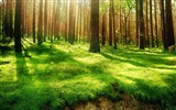 Title:Sunshine through Forest Desktop wallpaper Views:12844
