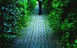 Title:cobblestone alley-Summer landscape wallpaper Views:5332