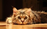 Title:cute funny cat-Animal wallpaper Views:16246