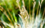 Title:dry grass-Macro photography wallpaper Views:3733