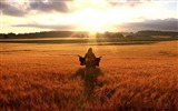 Title:happy woman in golden wheat field-Summer landscape wallpaper Views:10865