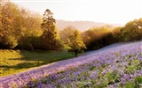 Title:lavender field-Summer landscape wallpaper Views:15331