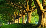 Title:summer trees-Summer landscape wallpaper Views:8011