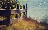 Title:fence plants seaside-Summer landscape wallpaper Views:4866