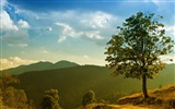 Title:grass tree sky-Summer landscape wallpaper Views:6356