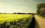 Title:road field-Summer landscape wallpaper Views:6388