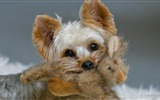 Title:Cute Puppy-dog photo wallpaper Views:11076