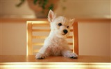 Title:Dog at the table-dog photo wallpaper Views:8194