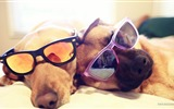 Title:Fashion Dogs-dog photo wallpaper Views:9362