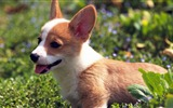 Title:Funny Puppy Outdoors-dog photo wallpaper Views:10709