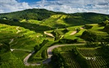 Title:German vineyards-Bing Wallpaper Views:49375