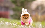 Title:Happy Dog-dog photo wallpaper Views:30545