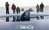 Title:Big Miracle 2012 Movie HD Desktop Wallpapers Views:4002