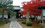 Title:Maple Leaf Red the Kyoto Enkoji Temple Autumn wallpaper Views:9491