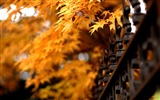 Title:Autumn natural scenery theme wallpapers Views:8842