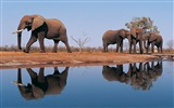 Title:african elephants-Animal photography Wallpaper Views:5926