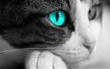 Title:cat eye-Animal photography Wallpaper Views:15241