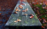 Title:leaves on the bench-Autumn landscape widescreen wallpaper Views:3799