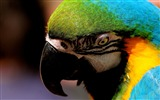 Title:parrot close up-Animal photography Wallpaper Views:11423