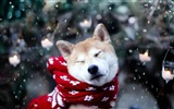 Title:2012 animal theme selected Wallpapers Views:9777