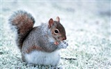 Title:Forest Elf-cute squirrel HD Wallpapers picture Views:7636