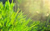 Title:Grass Morning-2012 Natural plant Featured wallpaper Views:5296