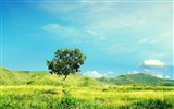 Title:Beautiful fresh landscape widescreen Wallpapers Views:9506