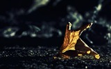 Title:dried leaf bokeh-autumn of natural scenery Wallpaper Views:4810