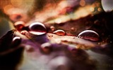 Title:fall leaves and raindrops-autumn of natural scenery Wallpaper Views:3306