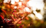 Title:foliage bokeh-autumn of natural scenery Wallpaper Views:4256
