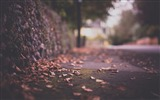 Title:leaves on pavement-autumn of natural scenery Wallpaper Views:3762