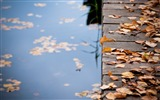 Title:leaves on wooden bridge-autumn of natural scenery Wallpaper Views:4071