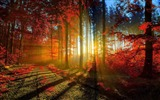 Title:red forest-autumn of natural scenery Wallpaper Views:26108