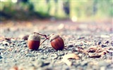 Title:Acorns-2012 Macro Photography Featured Wallpaper Views:3435