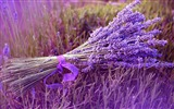 Title:Bouquet Lavender -Landscape with beat wallpaper Views:26104