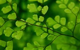 Title:Branch Green-2012 Macro Photography Featured Wallpaper Views:4123