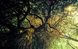 Title:Branches-Ubuntu 10-04 LTS official beautiful Desktop Wallpapers Views:3543