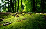 Title:Forest Moss Green-2012 Macro Photography Featured Wallpaper Views:14775