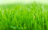 Title:Green grass macro-Ubuntu 10-04 LTS official beautiful Desktop Wallpapers Views:6393