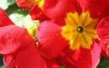 Title:Red flowers-Ubuntu 10-04 LTS official beautiful Desktop Wallpapers Views:3372
