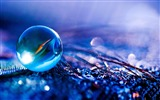 Title:2012 Macro photography theme selected wallpapers Views:14811